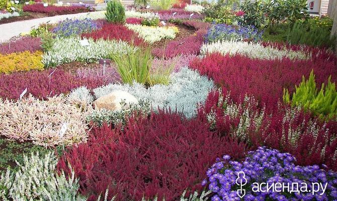 Вересковый сад - настоящая райская сказка