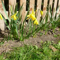 Запах весны!