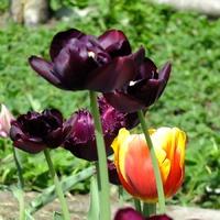 Мои любимые тюльпаны)