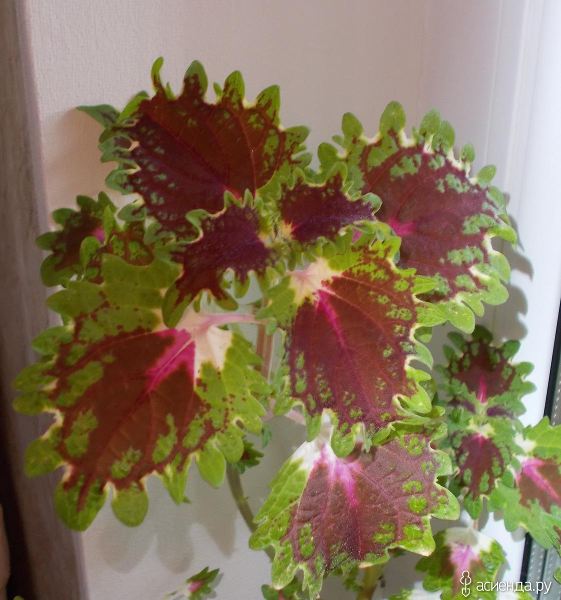Комнатные растения фото   MyFlru