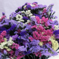 «Бумажные» цветы Кермека