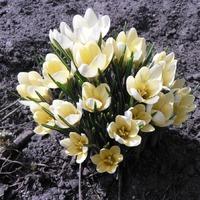 Весна вступила в свои права.