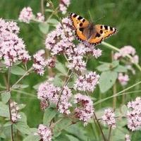 Бабочкам полет разрешается!