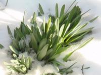 Весенние цветы январь февраль