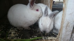 Блоги кроликовода. Знакомство.