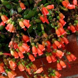 Растения для Тельца
