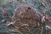 Радикальные способы борьбы с муравьями на участке - подскажите, пожалуйста!