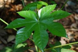 Растения для Весов