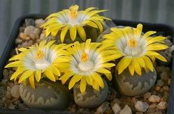 Растения для Козерога