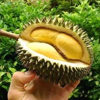Дуриан - король фруктов