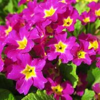 Мой сад 07.05.2015