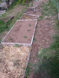 Мой опыт выращивания картофеля из семян..