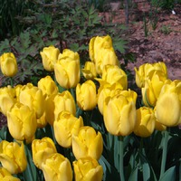 Сад непрерывного цветения. 12 мая.