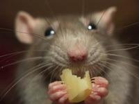 Охота на мыша