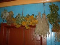 Мои дачные травяные заготовки!
