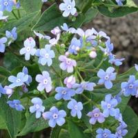 Сад непрерывного цветения. 16 мая.
