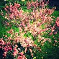 Цветение в саду.