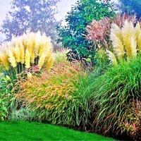 Травяной декор для сада. Часть 2
