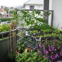 Огород на балконе. Часть 1