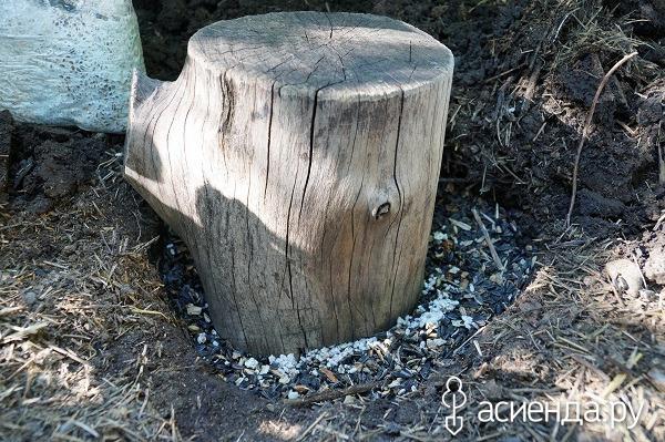 На каких деревьях можно выращивать грибы вешенки