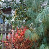 Осенняя окраска
