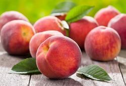 Боремся с персиковой тлей