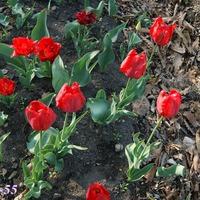 Наши первые цветы или Весна на пороге лета