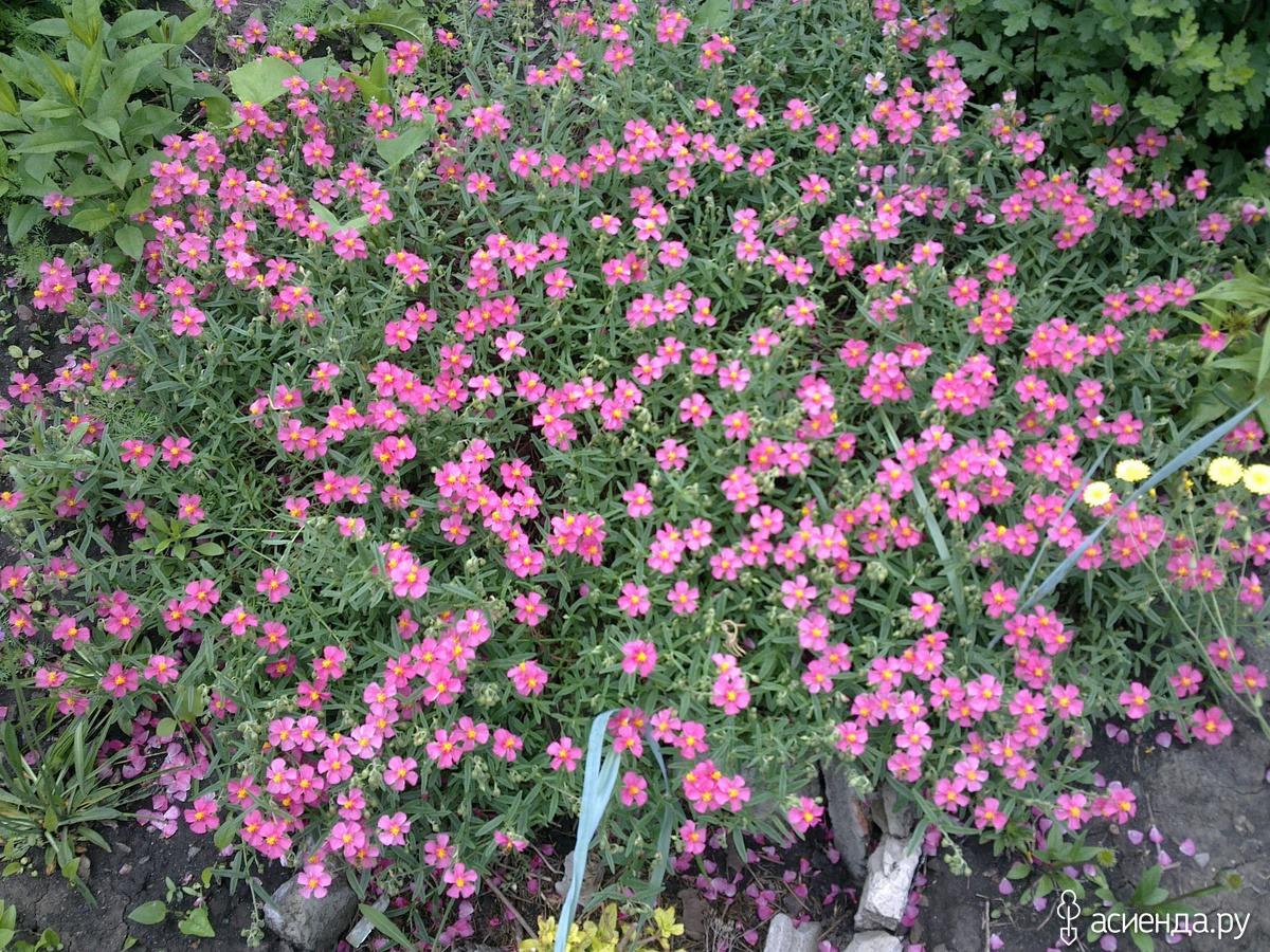 поле ввода солнцецвет цветы фото один очень экономный