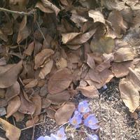 Осенний сюрприз