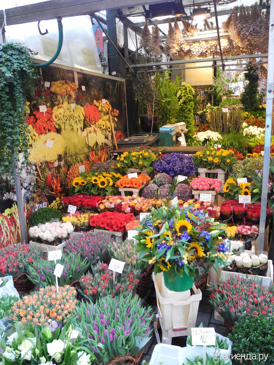 Букете сентября, оптовые рынки цветов адреса