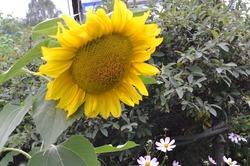 Влюблённые в Солнце