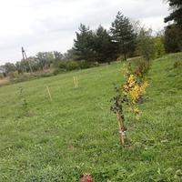 Живая изгородь с входной/парадной зоны