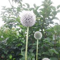 В помощь радушным садоводам