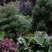 """Рододендронды и другие жители """"темной"""" стороны моего сада"""