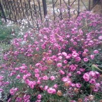 Цветы под снегом.