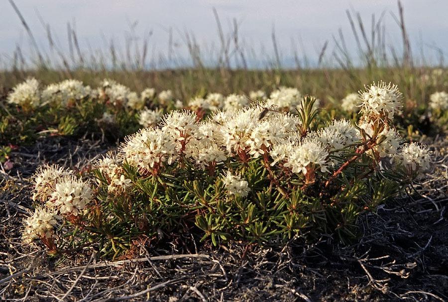 Доставкой букеты, цветы на севере россии