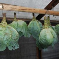 Как сохранить капусту. Часть 2