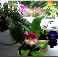 Ревизия домашних цветов. Часть вторая.