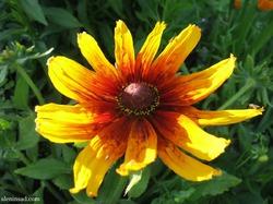 Радуга в моем саду: желтый