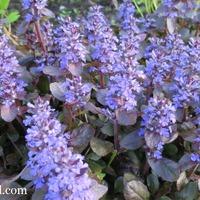 Радуга в моем саду: синий и голубой
