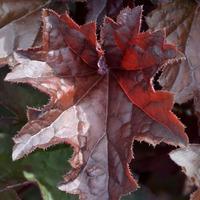 Бронзовый замок в моем саду или парад красивых листьев!