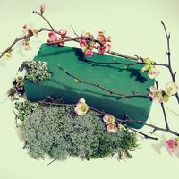 Как работать с флористическим оазисом