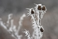 Кристаллизация растений