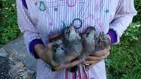 Как я спасала птенцов.