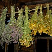 Воздушная сушка цветов