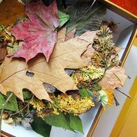 Как правильно сохранить растения для гербария