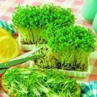 Как легко и быстро вырастить кресс-салат на подоконнике