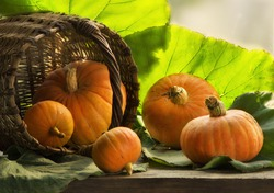 Секреты заготовки тыквы
