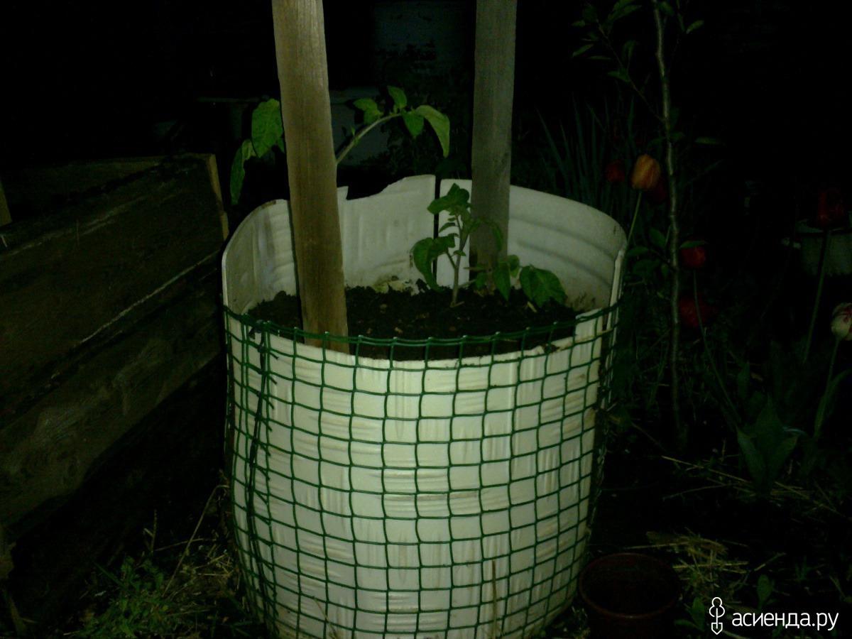 выращивание в пленочных мешках фото гостеприимство это