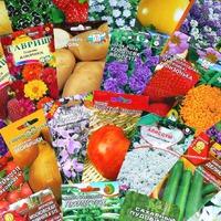 Никогда не поздно: покупка семян в интернете